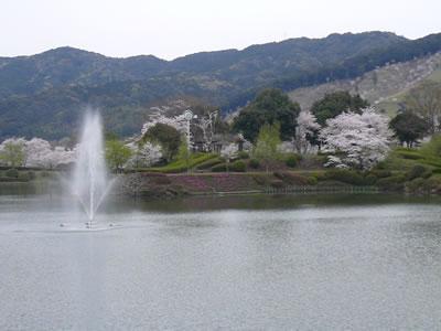観音池の桜.jpg